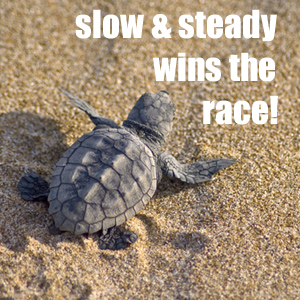 Slow & Steady Wins The Race